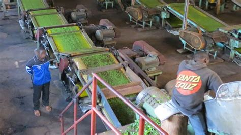 Pasthan Carla inspect tea processing units fssai to state officials