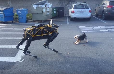 puppy vs real boston dynamics spot robot harassing a real geekologie