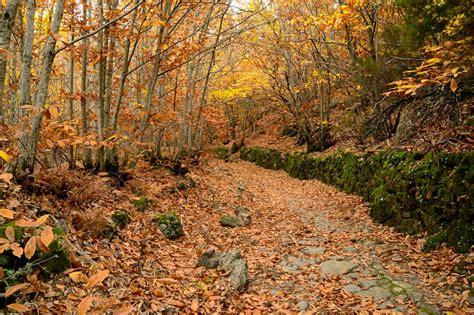 imagenes naturaleza otono centro de educaci 243 n ambiental quot el 193 guila quot la naturaleza
