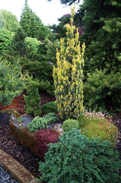 Evergreen Landscaping Ideas Evergreen Landscaping Ideas Eternal Oases Houz Buzz