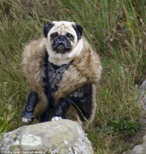 wizard pug owner dresses his pet pugs in hilarious costumes from tolkien s lord of the rings