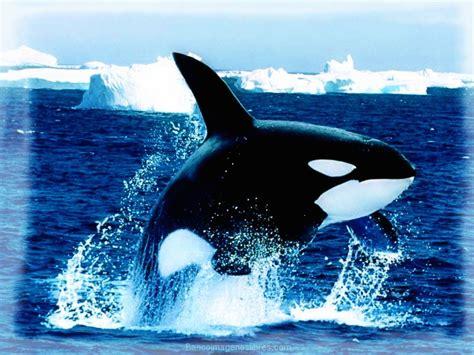 imagenes de animales naturales asombrosas fotos de paisajes con animales banco de