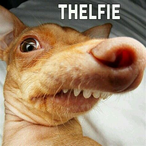 Overbite Dog Meme - 17 best images about funny stuff on pinterest cats