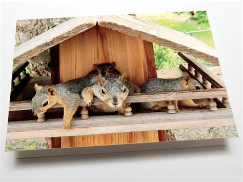 what to feed squirrels in backyard what to feed squirrels in backyard johnmilisenda com
