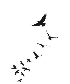 best 25 bird flying ideas on pinterest pretty birds