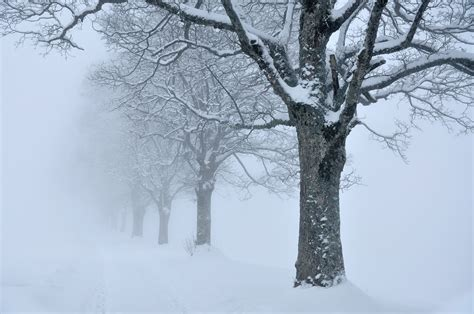 photos of snow file trees snow fog sk jpg wikimedia commons