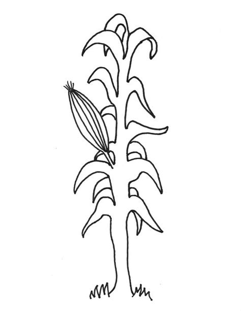 Corn Stalk Template corn stalk coloring page coloring home