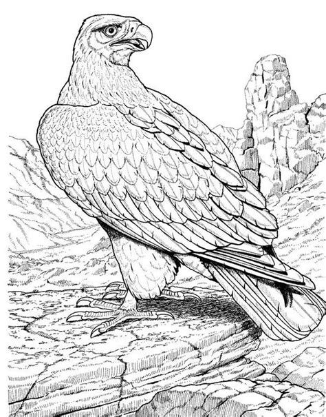 martial eagle coloring pages nice eagle coloring pages for kids eagle coloring pages