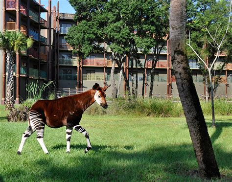 Polynesian Home Decor by Kidani Village Pembe Savanna Featuring Okapi Photo 1 Of 1