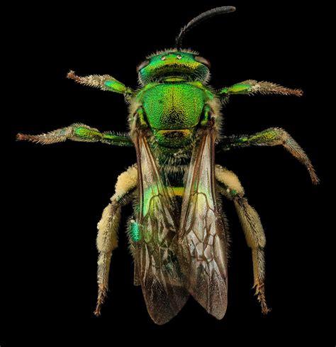 imagenes upsocl 8 im 225 genes de abejas que redefinir 225 la forma en que las