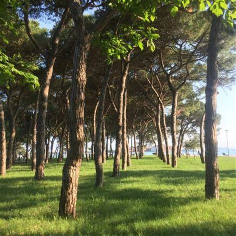 giardini pubblici venezia trees in the giardini pubblici foto di giardini pubblici