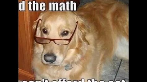 top  funny dog memes youtube