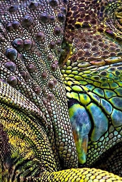 pin texture snake pictures reptiles skin pattern animals wallpaper on iguana abstract textile surface pattern nature patterns in nature и texture