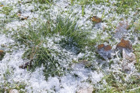 winter lawn care winter lawn care how to take care of grass in winter