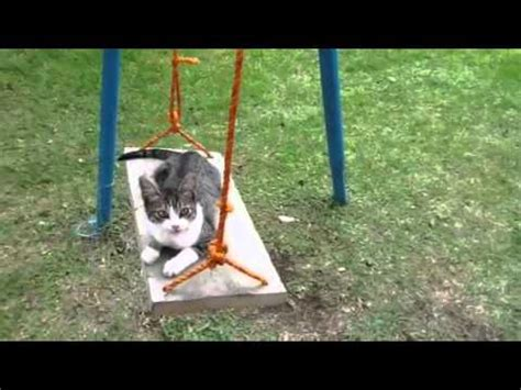 swings katze lazy cat on a swing