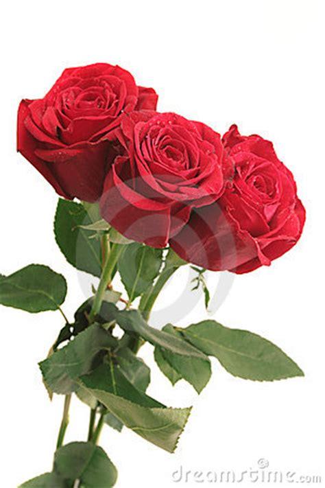 imagenes tres rosas tres rosas rojas hermosas foto de archivo imagen 3844400