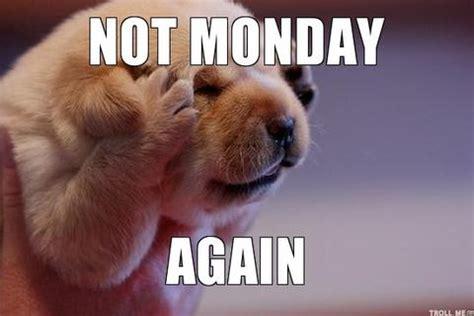 Monday Dog Meme - dog meme monday funny monday meme s dog memes
