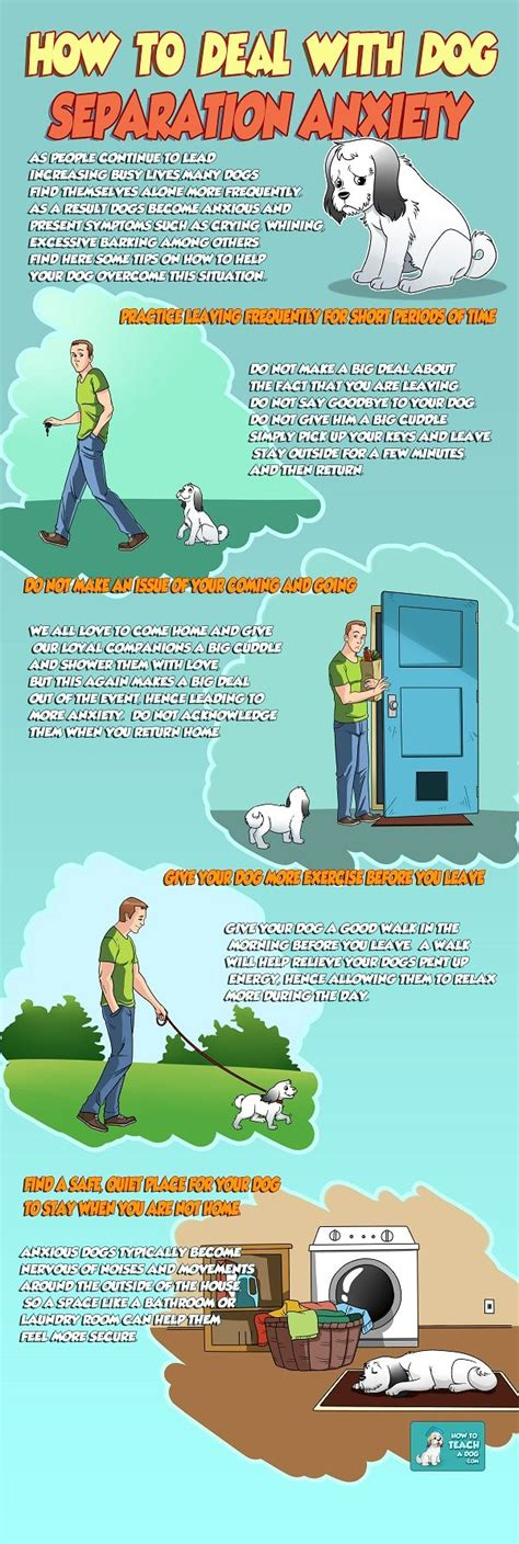 how to deal with puppy separation anxiety best 25 anxiety ideas on pet meds medication for dogs and dogs medicine