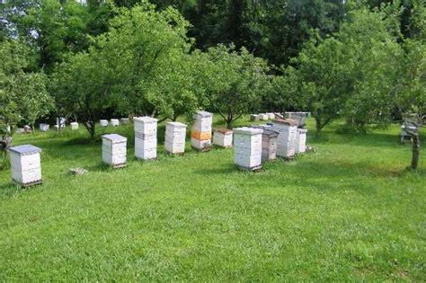honey bee house plans honey bee houses plans house design plans