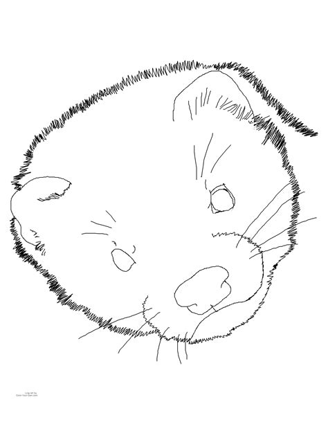 Ferret Coloring Page Ferret Coloring Pages