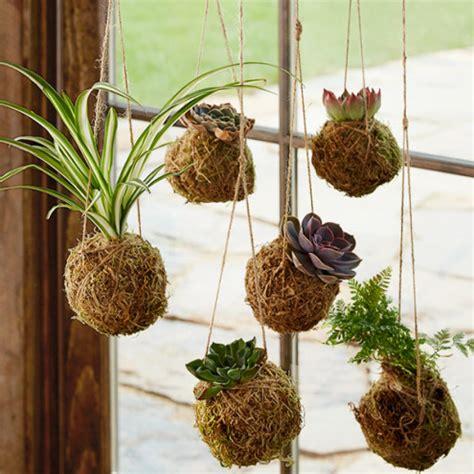 kokedama hanging string gardens   vivaterra