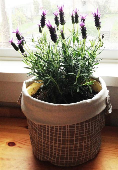 indoor plant ideas a green touch to decoration bored art