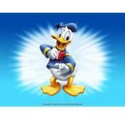Donald Duck Wallpaper  Disney 6638047 Fanpop