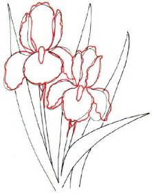 Iris Outline by How To Draw Howstuffworks
