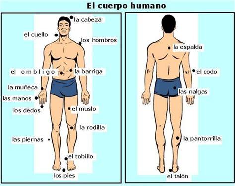 el cuerpo humano 848016977x vocabulario del cuerpo humano espa 241 ol para los ancianos