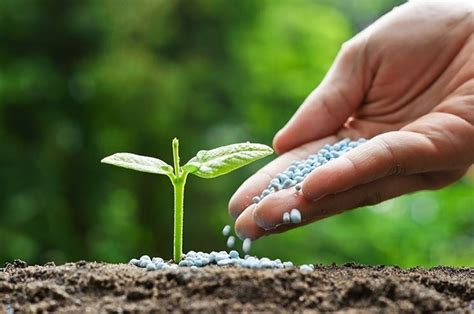 concimazione agrumi in vaso concimazione giardinaggio concimare