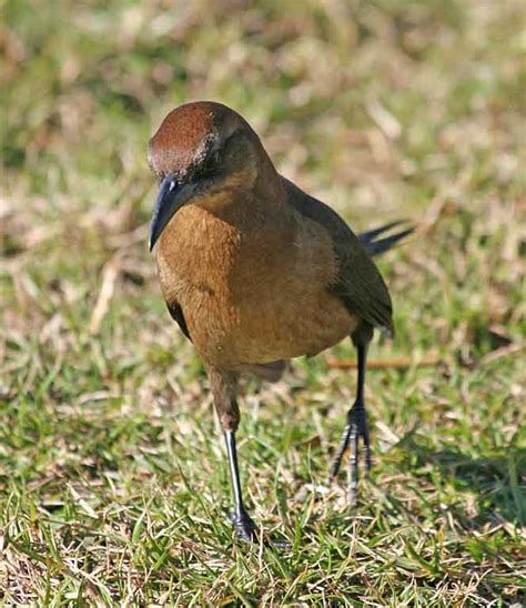 gimpy grackle kerry johnson