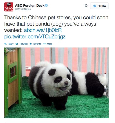 panda dogs panda craze sweeps china