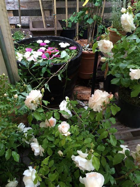 Duftende Garten Pflanzen by Duftende F 252 Lle Pflanzen