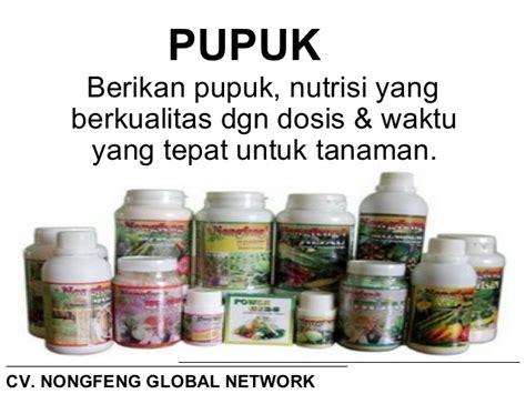Pupuk Nongfeng Untuk Cabe teknis budidaya tanaman cabe upload