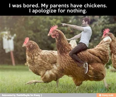 Backyard Chickens Jokes Best 25 Chicken Pictures Ideas On