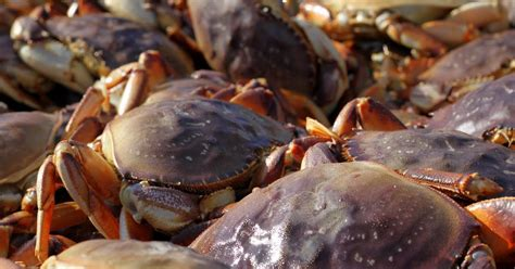 Whats In Season Dungeness Crabs by The Iron Chevsky Wine Celebrate Dungeness Crab