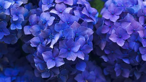 nr flower spring blue purple nature wallpaper