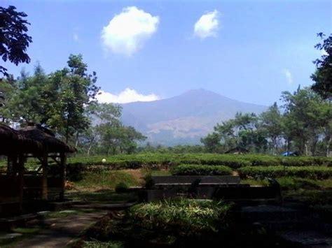 Teh Wonosari pemandangan g arjuna dari kebun teh wonosari picture of