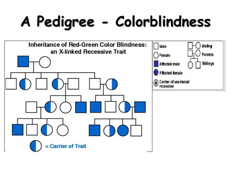 is color blindness x linked ppt linked traits powerpoint presentation id 678866
