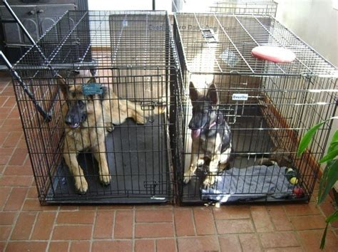crate german shepherd puppy effective crate for your german shepherd shepped