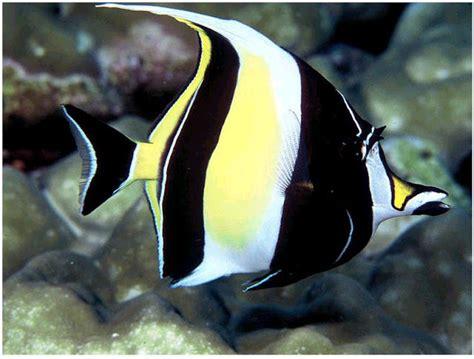 iwake nesta brow 10 ikan tercantik dan terkseksi di dunia dasa warta sahabat dw inilah 10