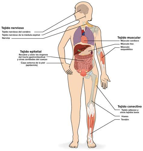 preguntas esenciales del ser humano musculos del cuerpo humano dibujo seonegativo