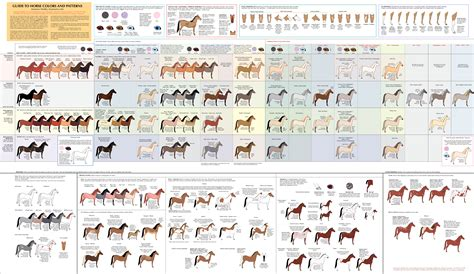 dog color pattern names guide to horse colors and patterns by majnouna on deviantart