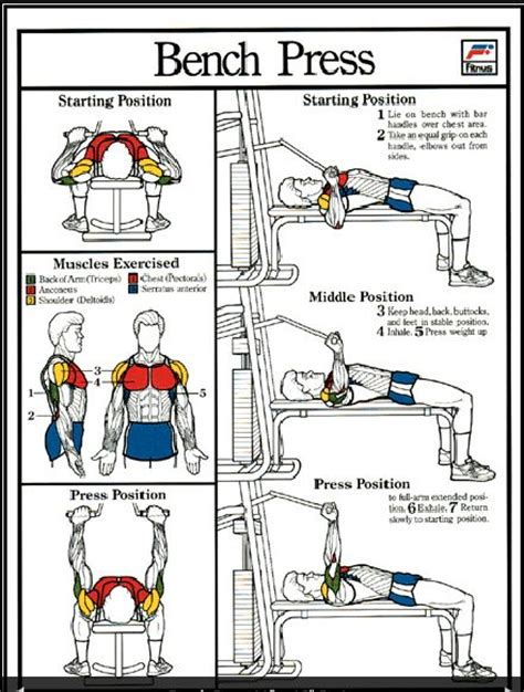 bench press routines powerlifting bench press workout program eoua blog