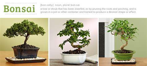 How Many Trees Does It Take To Make Paper - bonsai tree care for beginners everything you need to