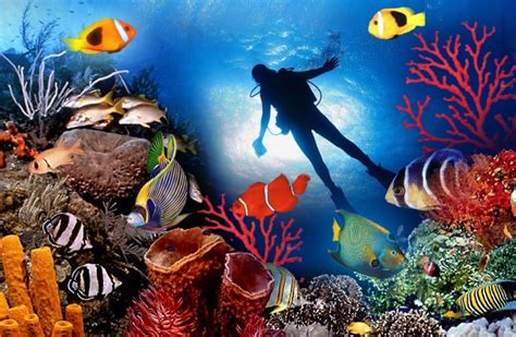 foto dive 22 best scuba diving destinations in the world freeyork
