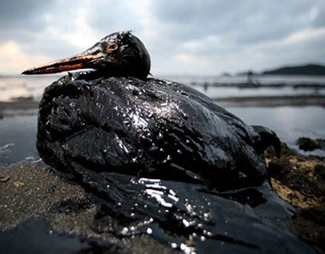 effects of ocean pollution on marine animals