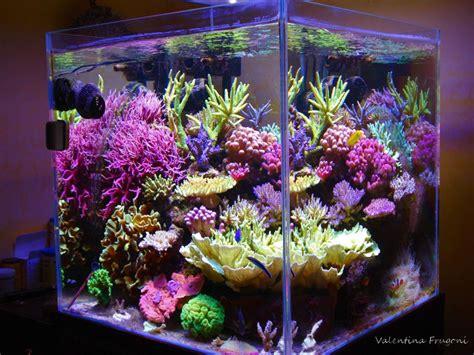 aquarium  valentina frugonis valentina