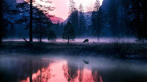 animals mammals plants landscape deer mist wallpapers