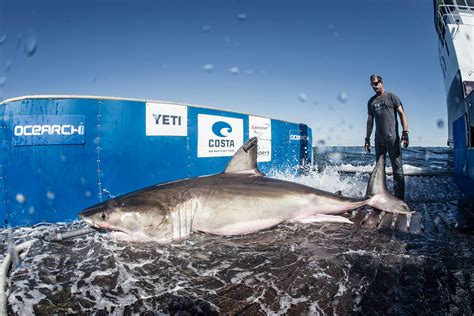 custom boat covers nova scotia how to legally catch a great white shark gearjunkie